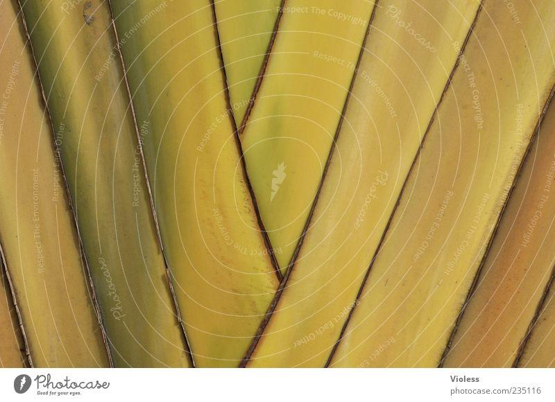 ... auf die Palme bringen Natur Pflanze gelb Streifen Muster Farbfoto Außenaufnahme Detailaufnahme Textfreiraum Menschenleer Nahaufnahme Hintergrundbild grün