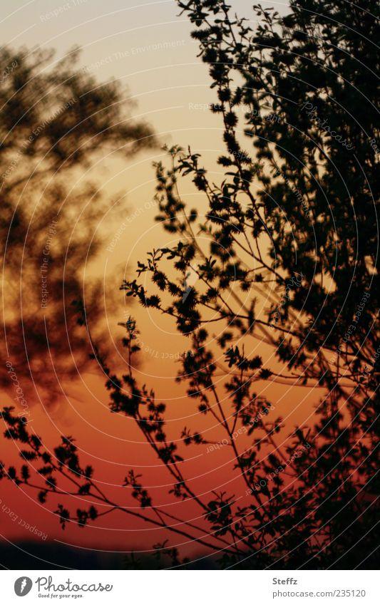 Abendstimmung Natur Pflanze Wolkenloser Himmel Sonnenaufgang Sonnenuntergang Sonnenlicht Sommer Schönes Wetter Baum Sträucher Blatt rot schwarz Stimmung