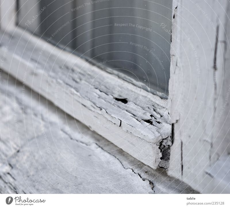 monochrome life alt weiß Fenster Holz grau Farbstoff Glas kaputt Wandel & Veränderung Vergänglichkeit Vergangenheit Verfall Gardine verwittert abblättern