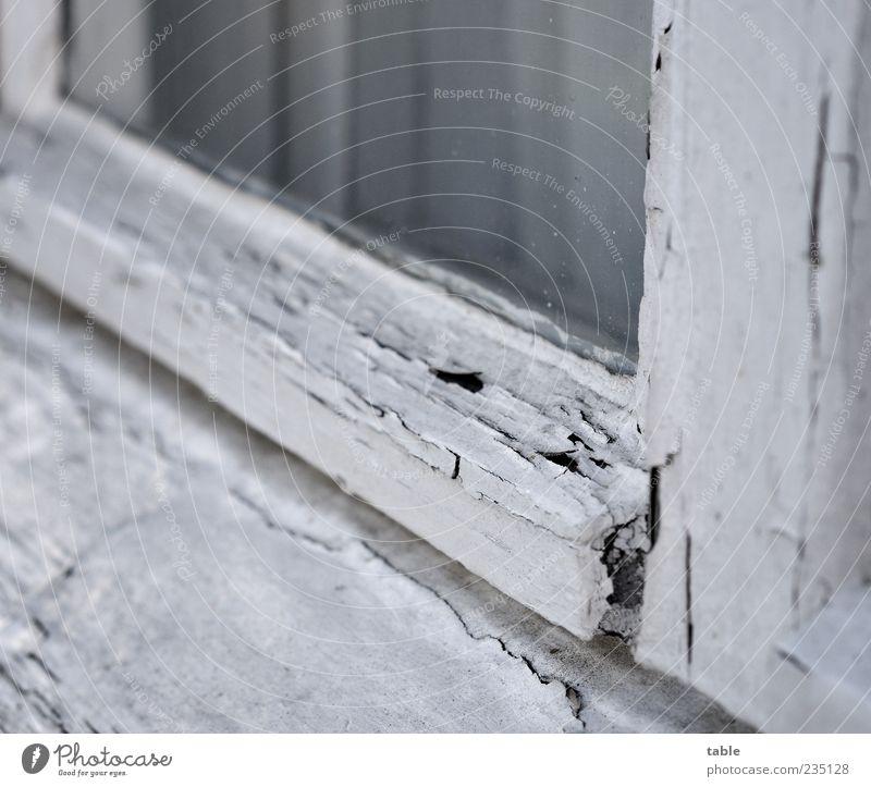 monochrome life alt weiß Fenster Holz grau Farbstoff Glas kaputt Wandel & Veränderung Vergänglichkeit Vergangenheit Verfall Gardine verwittert abblättern Glasscheibe