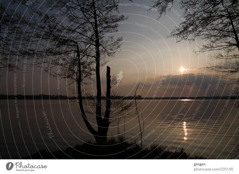Zur Ruhe kommen Umwelt Natur Landschaft Wasser Himmel Sonne Sonnenaufgang Sonnenuntergang Sonnenlicht Wetter Schönes Wetter Baum Sträucher Wellen Küste Seeufer