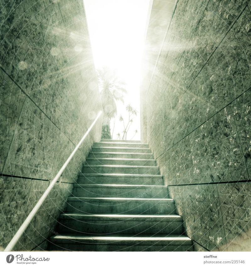 Gehe ins Licht. Sonne Sonnenlicht Sommer Schönes Wetter Mauer Wand Treppe modern Stein Palme Lissabon Gedeckte Farben Außenaufnahme Gegenlicht schemenhaft