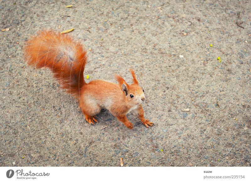Na du Tier Fell Wildtier 1 klein Neugier niedlich schön grau rot Eichhörnchen Nagetiere Schwanz Boden Interesse sanft Blick nach oben Vogelperspektive