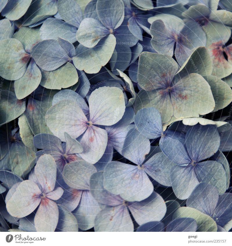 für alle weiblichen user und john krempl Pflanze Blume Blüte ästhetisch exotisch schön violett Farbe Kitsch Farbfoto Nahaufnahme Menschenleer Vogelperspektive