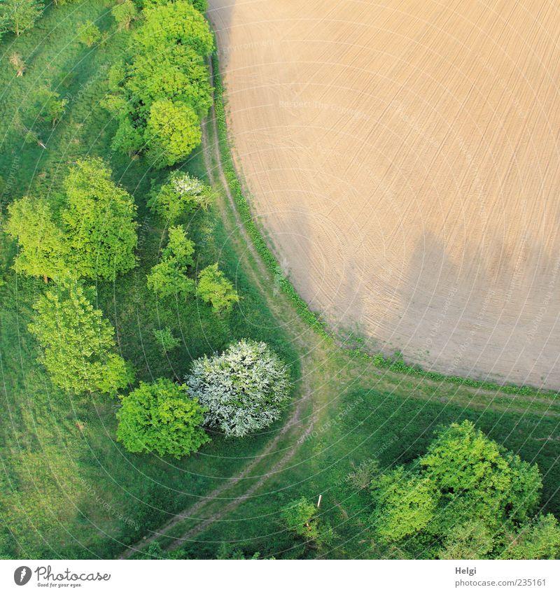 Luftaufnahme mit Acker, Bäumen, Gras und Weg im Frühling Umwelt Natur Landschaft Pflanze Erde Schönes Wetter Baum Sträucher Feld Wege & Pfade Wachstum