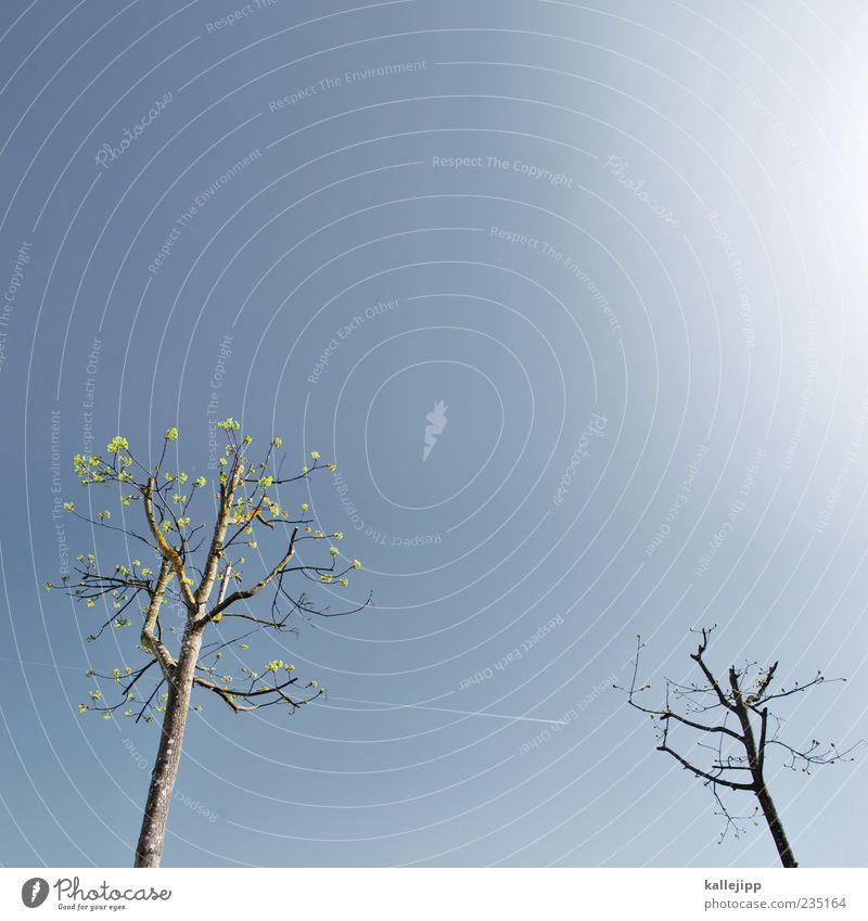 baumgespräch Himmel Natur Baum Pflanze Umwelt Frühling Wachstum Baumkrone Kondensstreifen laublos