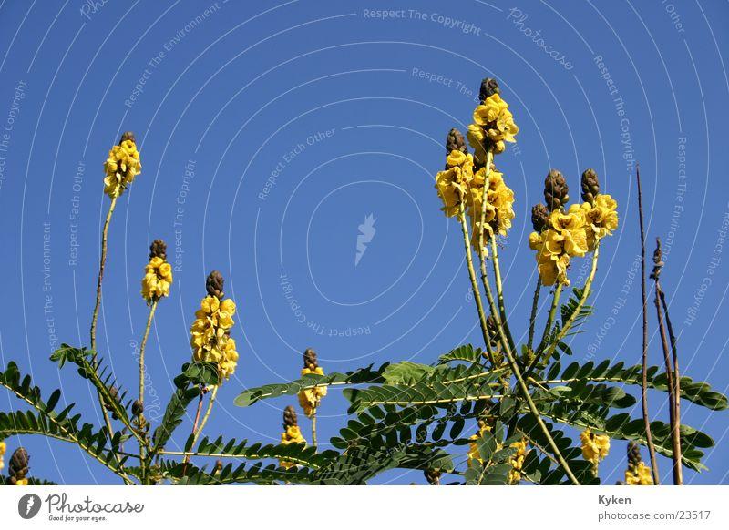Ab in den Himmel Blume Blüte grün gelb Wachstum Sommer Frühling blau Pflanzengrün
