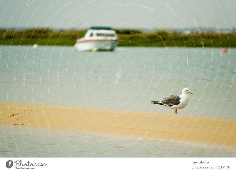 Möwe auf Sandbank Natur Wasser Sonne Meer Sommer Strand Tier Erholung Landschaft Freiheit Küste Sand See Vogel Wellen Insel