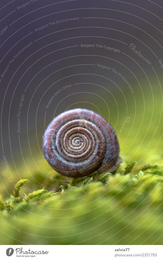 mystisch Natur Pflanze grün ruhig dunkel Kunst grau braun Design Linie ästhetisch Zeichen rund Schutz Moos Schnecke