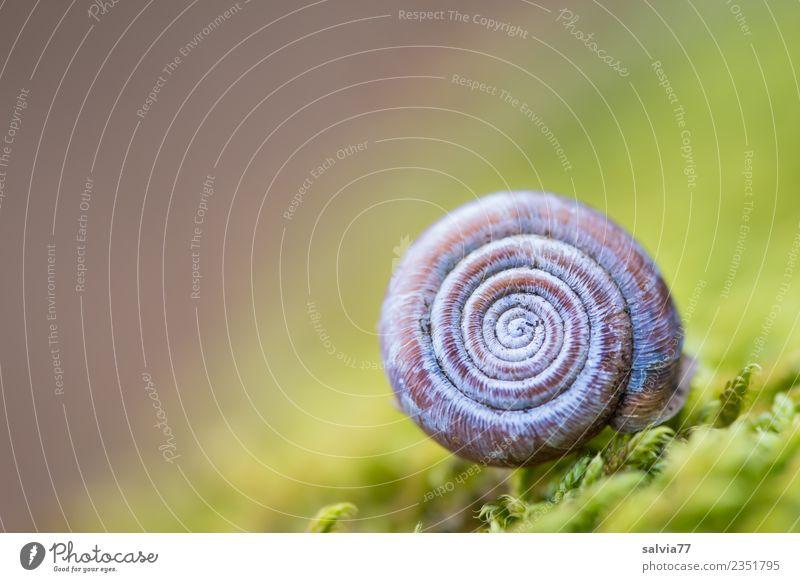 rundes Häuschen Natur Pflanze Tier Erde Moos Grünpflanze Wald Schnecke Schneckenhaus ästhetisch weich blau braun grün Design einzigartig Idylle Pause