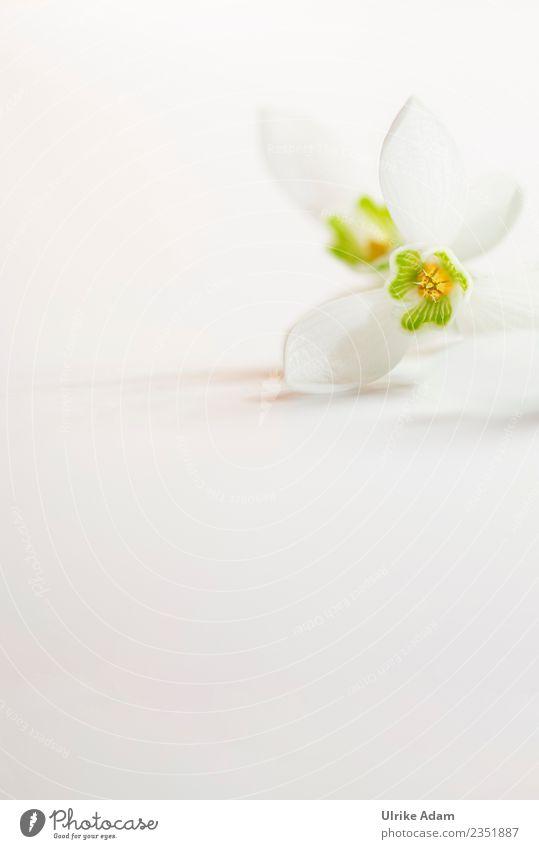 Blüte des Schneeglöckchens Wellness Leben harmonisch Wohlgefühl Zufriedenheit Sinnesorgane Erholung ruhig Meditation Spa Muttertag Ostern Hochzeit Geburtstag