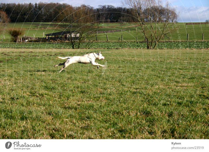 Mein Hund Mischling Geschwindigkeit Feld Wald Wiese 100 Meter Lauf Pfote Winter Frühling rennen Spurt Gassi gehen Spaziergang