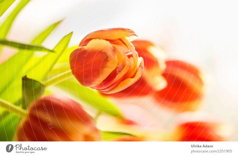Ein Frühlingsgruß mit Tulpen elegant Wellness Postkarte Osterkarte Ostern Pflanze Blume Blatt Blüte Dekoration & Verzierung Blumenstrauß Blühend verrückt grün