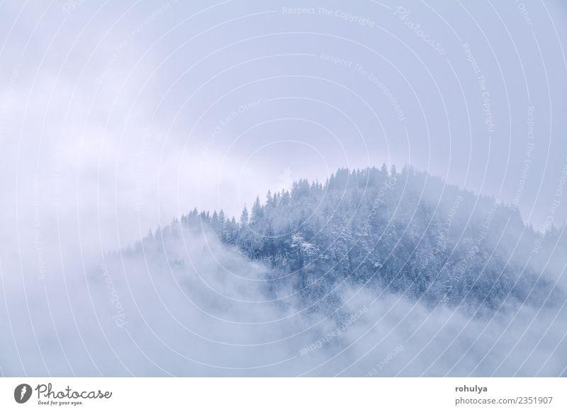 Berggipfel im Winternebel, Deutschland Ferien & Urlaub & Reisen Tourismus Schnee Berge u. Gebirge Natur Landschaft Wolken Wetter Unwetter Nebel Wald Alpen