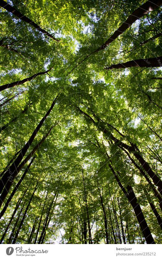 borkenkäfers dream Sommer Umwelt Natur Pflanze Himmel Frühling Baum blau grün schwarz Baumstamm Blatt Ast Buche Wald Buchenwald Baumkrone Eiche Farbfoto