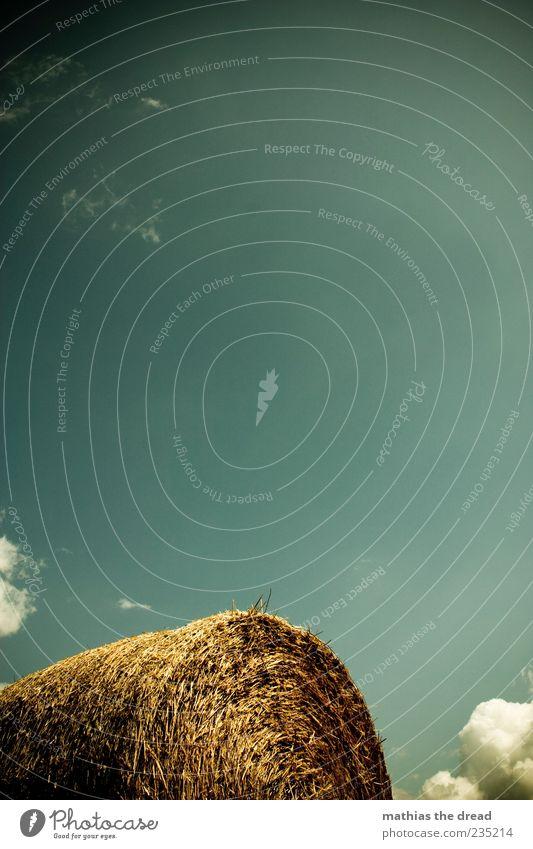 STROH Umwelt Natur Himmel Wolken Sommer Schönes Wetter rund Strohballen Anschnitt Farbfoto mehrfarbig Außenaufnahme Menschenleer Textfreiraum oben Tag Licht