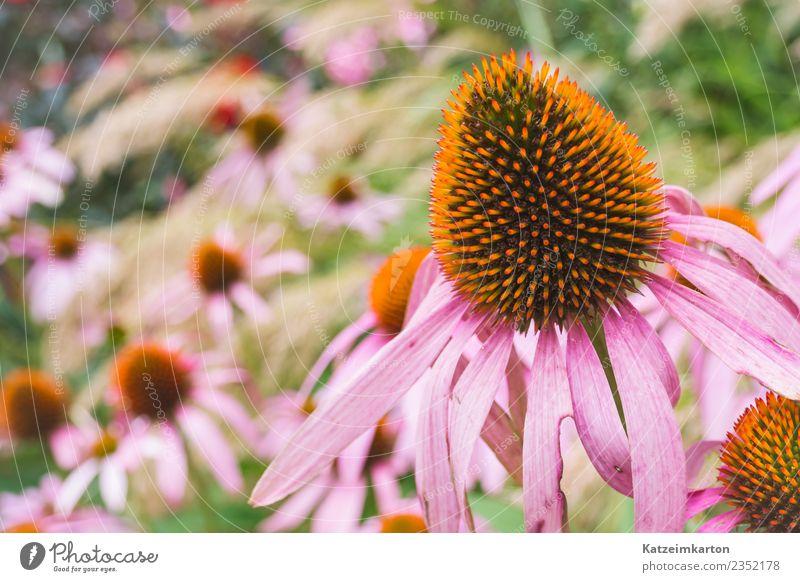 Blumenbeet im Garten Umwelt Natur Landschaft Pflanze Tier Sonnenlicht Frühling Sommer Grünpflanze Park Wiese Fröhlichkeit Lebensfreude Wachstum Blüte