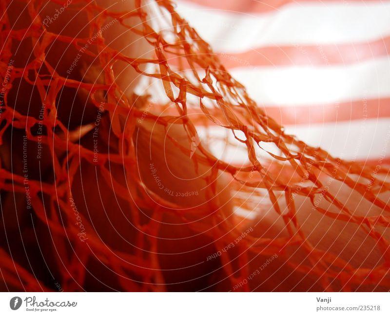 Ins Netz gegangen Lebensmittel Linie Ordnung Zwiebel Nylon orange Streifen Beutel Farbfoto Makroaufnahme Muster Tag Unschärfe Anschnitt Detailaufnahme gestreift