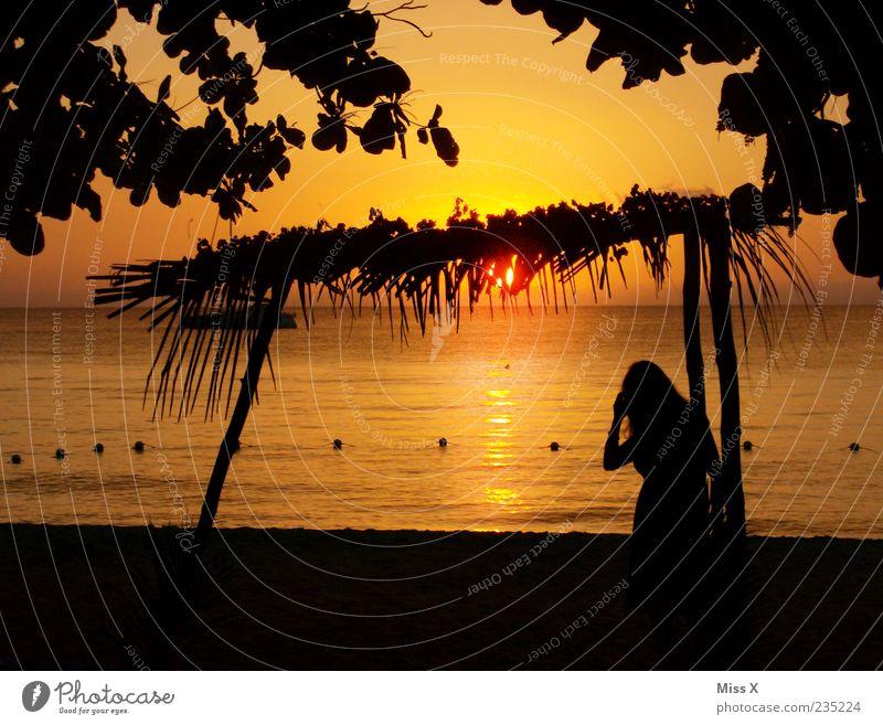 She´s back Mensch Himmel Baum rot Ferien & Urlaub & Reisen Sonne Meer Sommer Strand Blatt schwarz Ferne gelb Erholung Küste Abenteuer