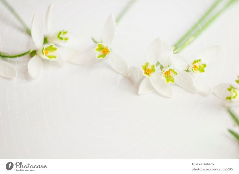 Romantischer Blumen Rahmen auf hellem Hintergrund Pflanze schön weiß Erholung ruhig Leben Blüte Liebe Frühling Zufriedenheit Dekoration & Verzierung Geburtstag