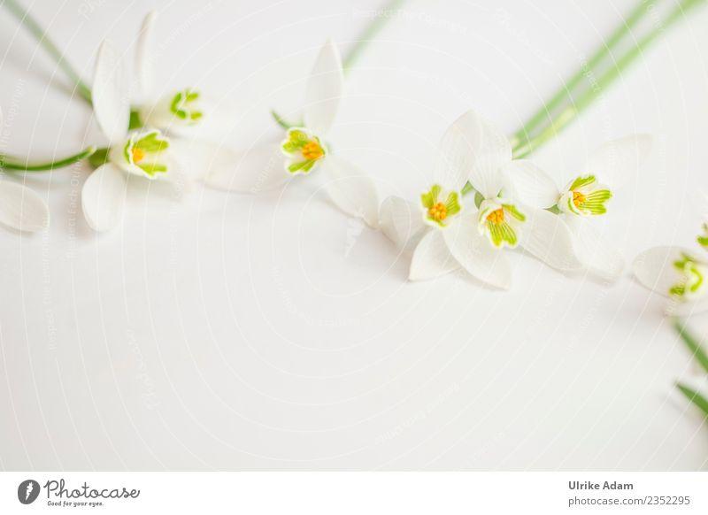 Romantischer Blumen Rahmen auf hellem Hintergrund Wellness Leben harmonisch Wohlgefühl Zufriedenheit Erholung ruhig Meditation Postkarte Valentinstag Muttertag