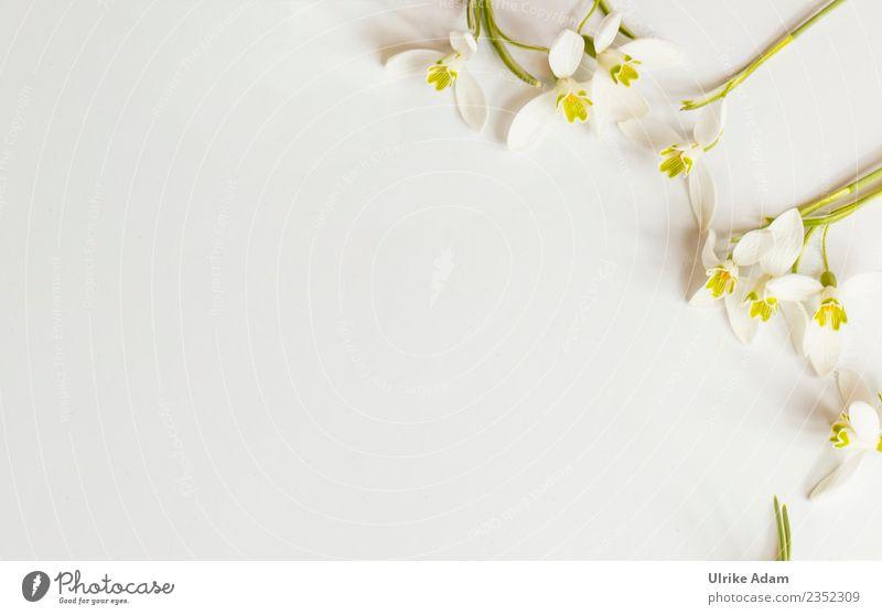 Romantischer Blumen Rahmen auf hellem Hintergrund Pflanze schön grün weiß Erholung Leben Blüte Liebe Frühling Feste & Feiern Freundschaft Zufriedenheit