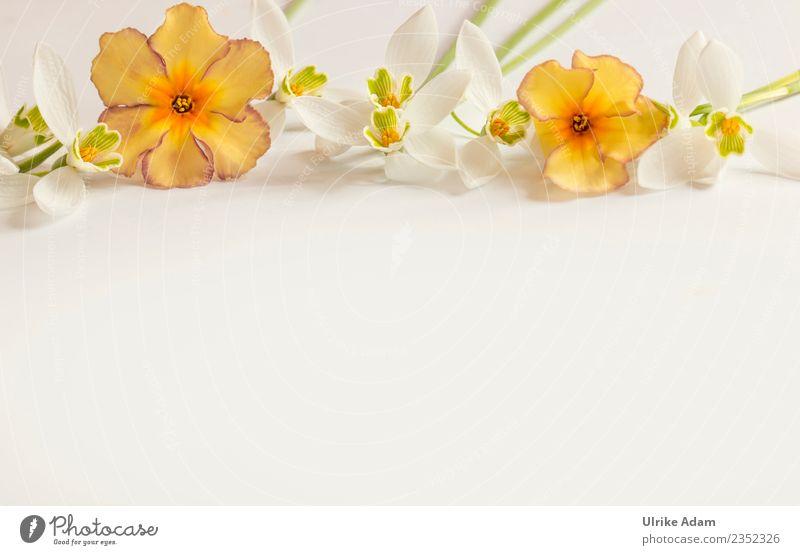 Romantische Vorlage mit Schneeglöckchen und Primeln Wellness Leben harmonisch Wohlgefühl Zufriedenheit Erholung ruhig Meditation Postkarte Hintergrundbild