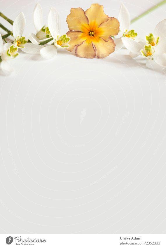 Dekorative Vorlage mit zarten Blüten Pflanze weiß Blume Erholung ruhig Leben Hintergrundbild Liebe Frühling orange Zufriedenheit Geburtstag Romantik Hochzeit
