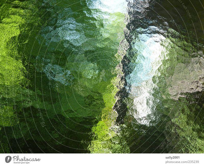 grün-blaue Phase Pflanze Himmel Baum Sträucher Blatt Garten Fenster Glas ästhetisch Surrealismus Farbfoto Innenaufnahme Experiment Menschenleer Tag Licht