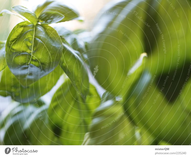 Heimgarten. Natur grün Pflanze Umwelt Gesundheit frisch ästhetisch Kräuter & Gewürze ökologisch mediterran Grünpflanze Blattadern dezent Basilikum Küchenkräuter