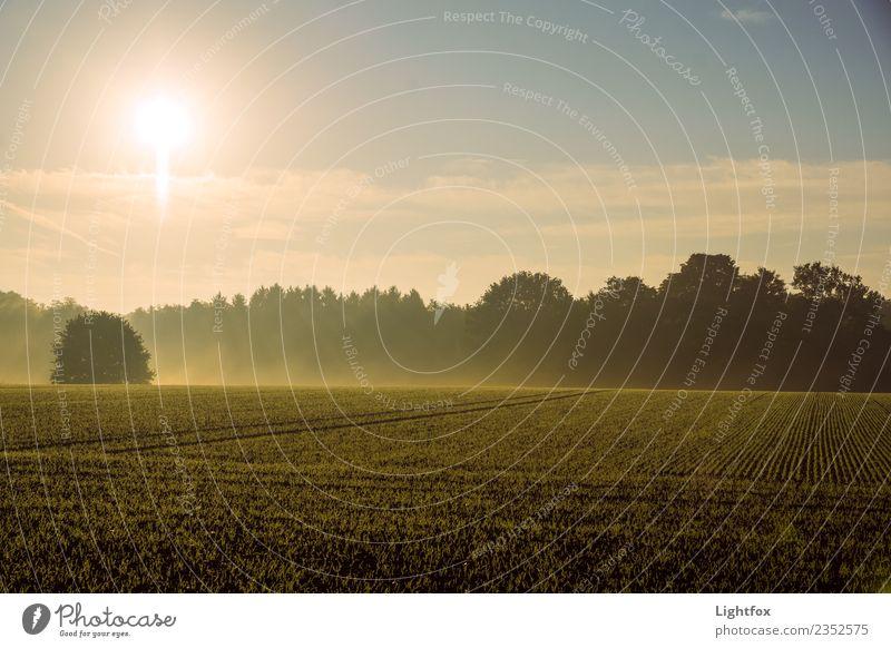 Guten Morgen Umwelt Natur Landschaft Pflanze Erde Himmel Wolken Sonne Sonnenlicht Frühling Sommer Herbst Winter Klima Klimawandel Wetter Schönes Wetter Wärme