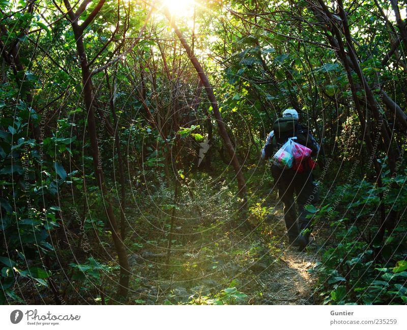 walk dady walk,... maskulin 1 Mensch 45-60 Jahre Erwachsene Umwelt Natur Pflanze Erde Sonne Sommer Baum Sträucher Grünpflanze Wildpflanze Urwald mehrfarbig grün