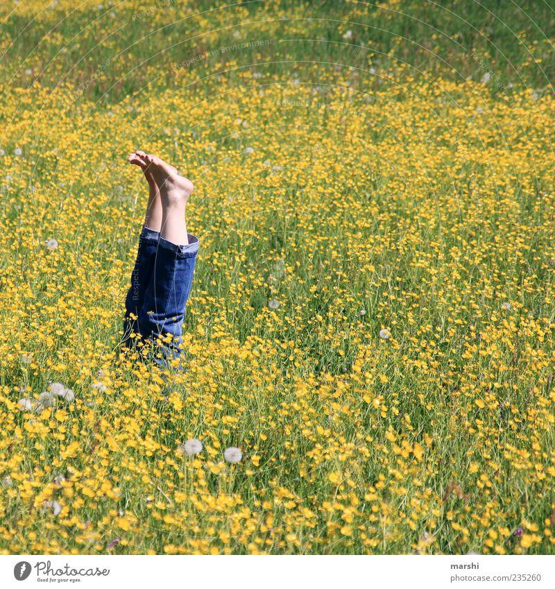 es hat mich umgehauen | 444 Natur Pflanze Sommer Blume gelb Landschaft Wiese Gras Frühling Blüte Beine lustig Fuß liegen Jeanshose Liege