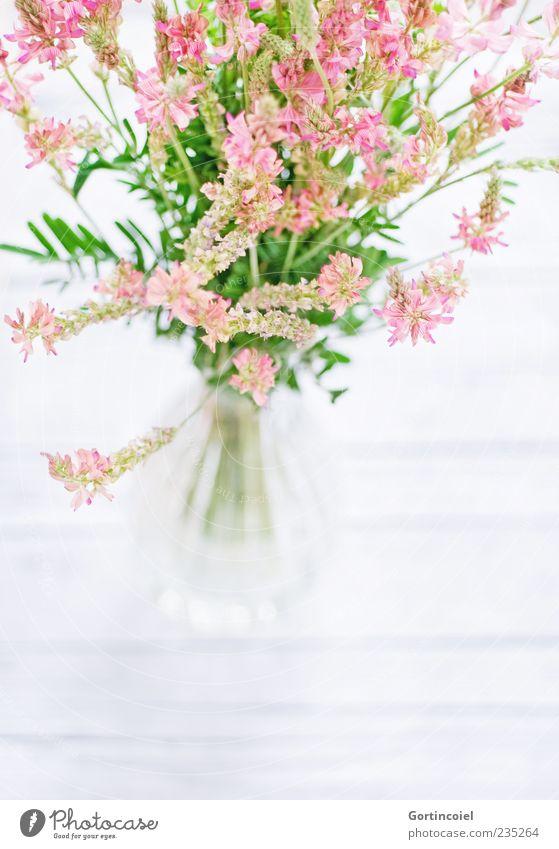 Feldblumen Natur Frühling Sommer Pflanze Blume Blüte hell schön grün rosa weiß Blumenstrauß Dekoration & Verzierung Vase Blumenvase Blütenpflanze gepflückt