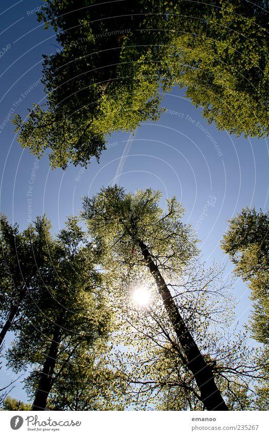 Licht im Dach Sommer Sonne Umwelt Natur Himmel Wetter Pflanze Baum Wald hoch natürlich blau grün Baumstamm Kondensstreifen Flugzeug Luftverkehr Blätterdach