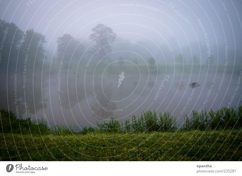 Natur Wasser schön ruhig Erholung Umwelt Landschaft kalt Gras Stimmung Park Wetter Nebel Morgendämmerung