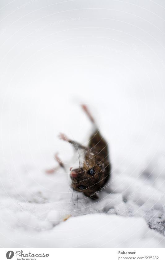 Maus am Stiel Natur Wasser Tier Auge Tod Schnee Gefühle Traurigkeit Eis Wildtier Nase Frost Wandel & Veränderung Trauer Fell