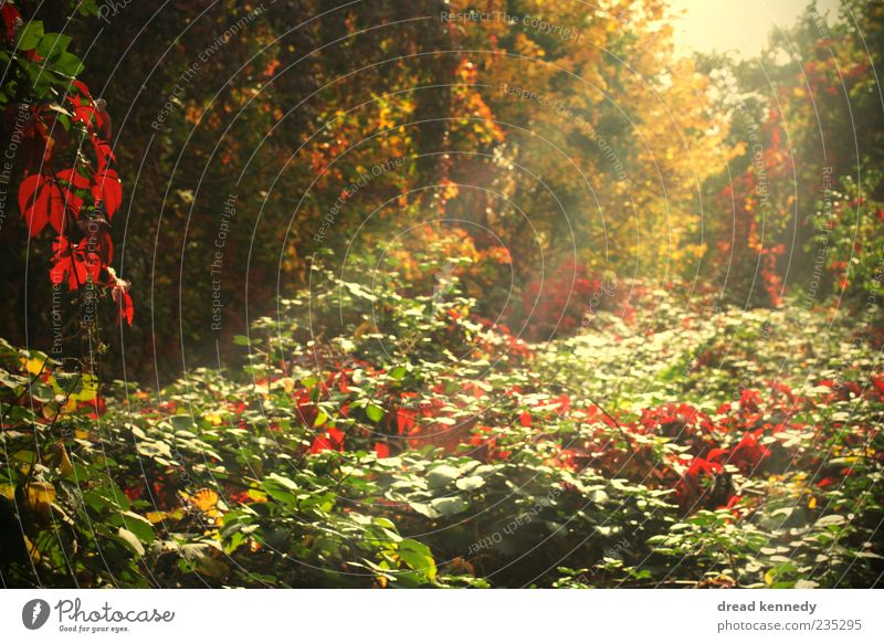 Beautiful Sun Day Natur grün schön Baum rot Pflanze Sommer Blatt Farbe Herbst Gras Garten Blüte Sträucher Idylle Schönes Wetter