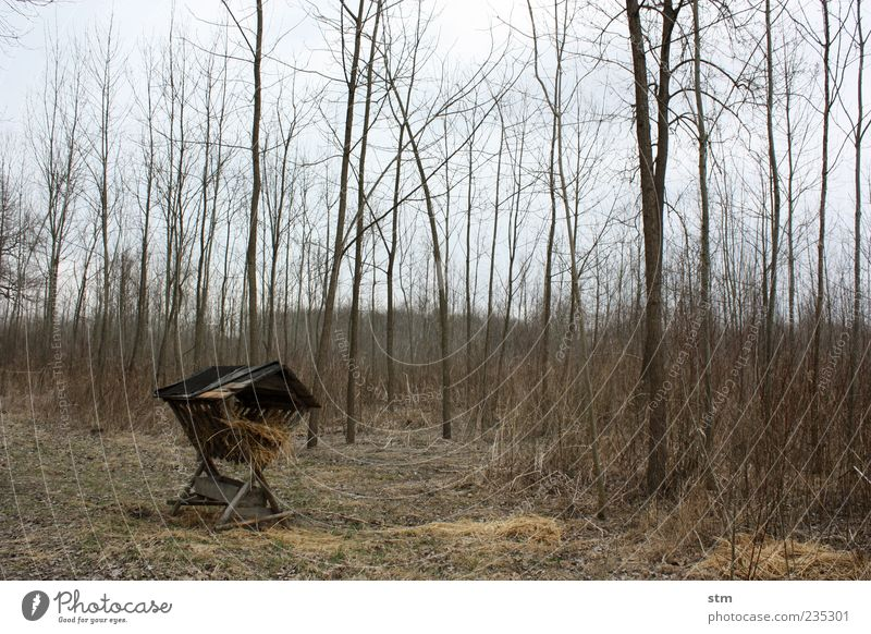 waldfrieden [waffenstillstand] Himmel Natur Baum Pflanze ruhig Wald Umwelt Landschaft Gras Horizont Erde trist bedrohlich Umweltschutz vertrocknet füttern