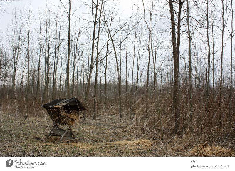 waldfrieden [waffenstillstand] Umwelt Natur Landschaft Pflanze Erde Himmel Baum Wald Waldlichtung Horizont Umweltschutz bedrohlich Wildnis füttern Heu Stroh