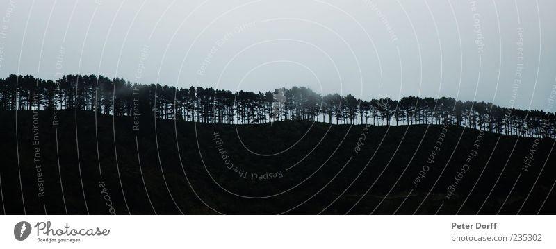 Baumkette Natur Wolken Wald ästhetisch Hügel Panorama (Bildformat) Baumreihe