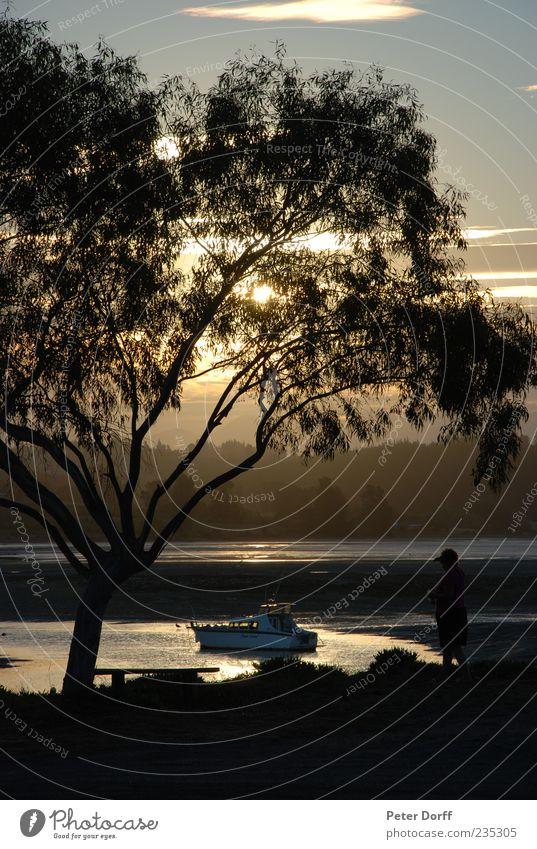 Paradise on Earth Natur Sonne Sonnenaufgang Sonnenuntergang Sonnenlicht Sommer Schönes Wetter Baum Küste Erholung Gelassenheit Glück Wasserfahrzeug Ebbe Ast