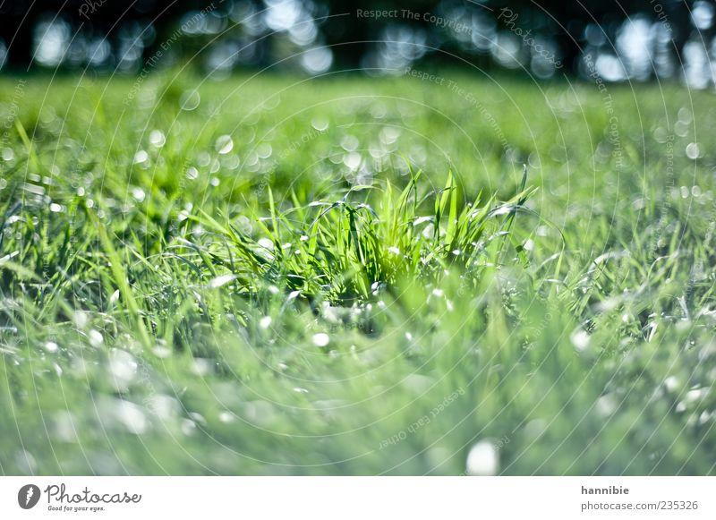 wiese Natur grün Landschaft Wiese Gras Frühling glänzend natürlich