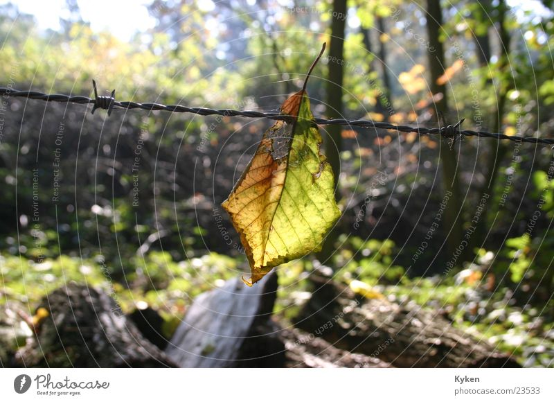das Ende Wald Blatt Herbst Stacheldraht Licht Abschied Sonne