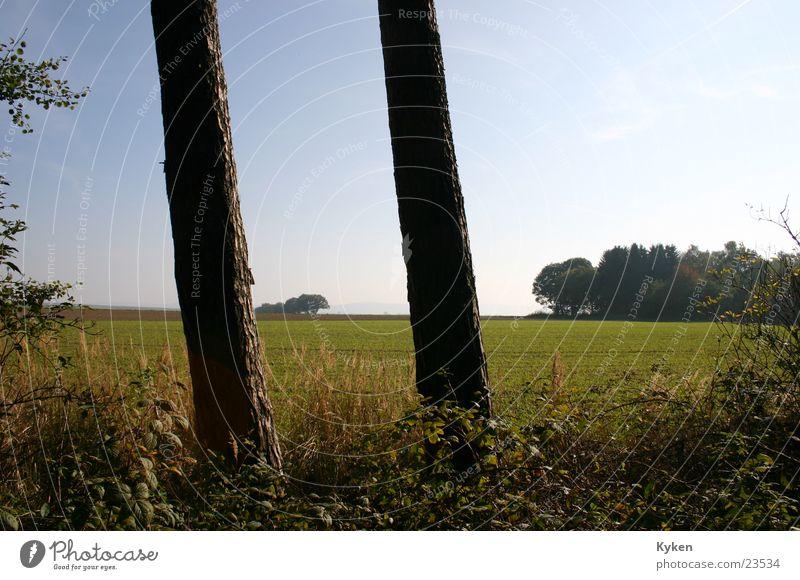 Säulen der Natur Baum Feld Wiese Aussicht grün Blatt Herbst standfest Ferne Detailaufnahme