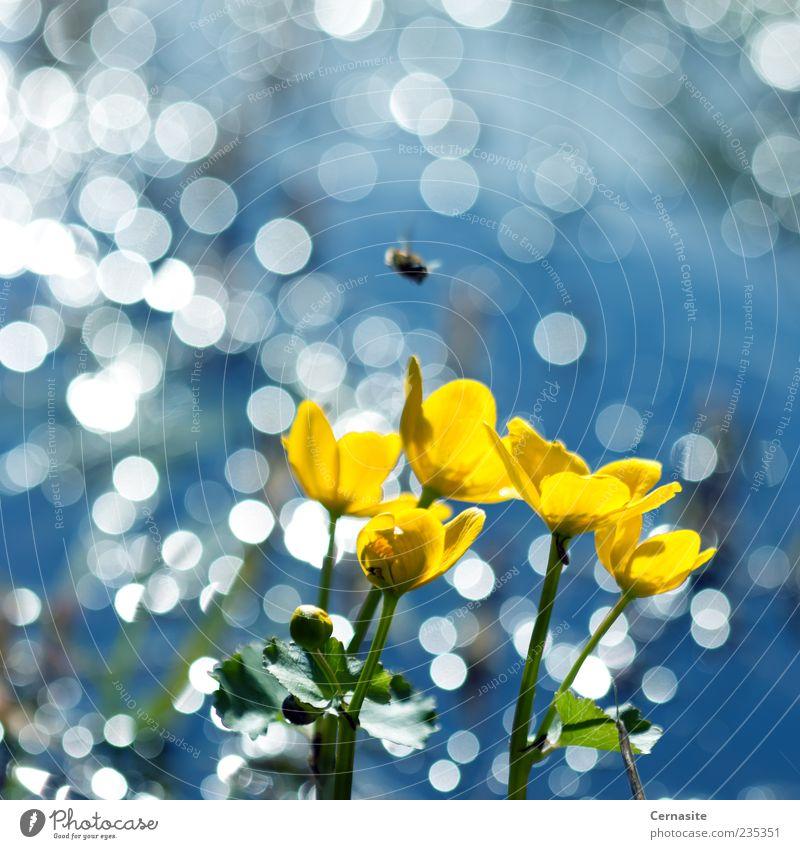 Natur blau grün schön Pflanze Blume Blatt gelb Wiese Frühling Feld außergewöhnlich Trinkwasser Insel Fliege authentisch