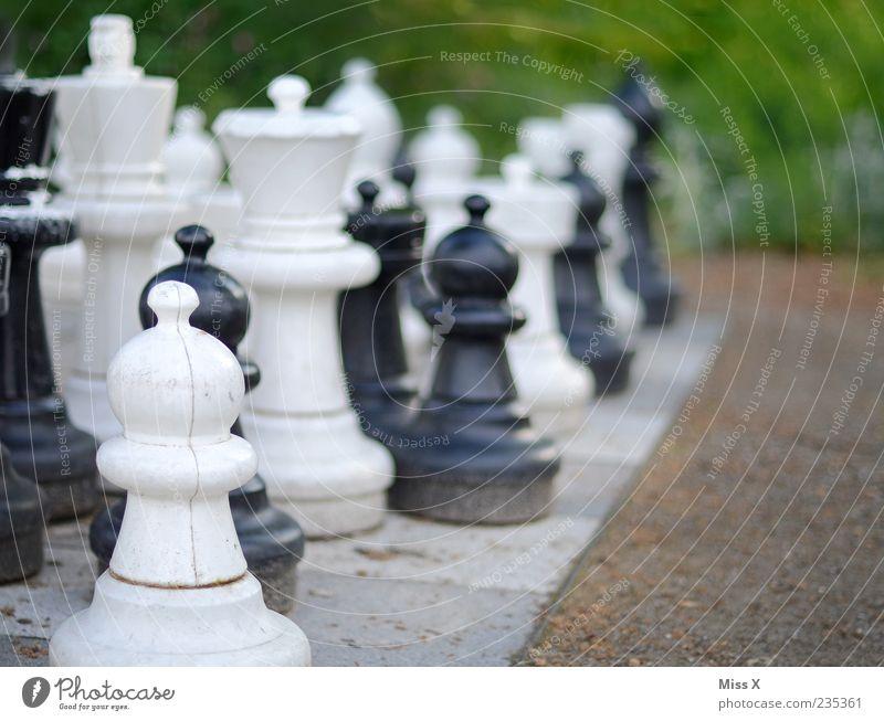 Gartenschach Freizeit & Hobby Spielen Brettspiel Schach Park Konzentration planen Schachfigur Schachbrett Verstand schwarz weiß outdoorschach Farbfoto