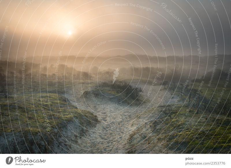Nebel Natur Ferien & Urlaub & Reisen Pflanze Sommer Landschaft Sonne Ferne Strand Umwelt Wege & Pfade Küste Gras Freiheit Sand Wetter
