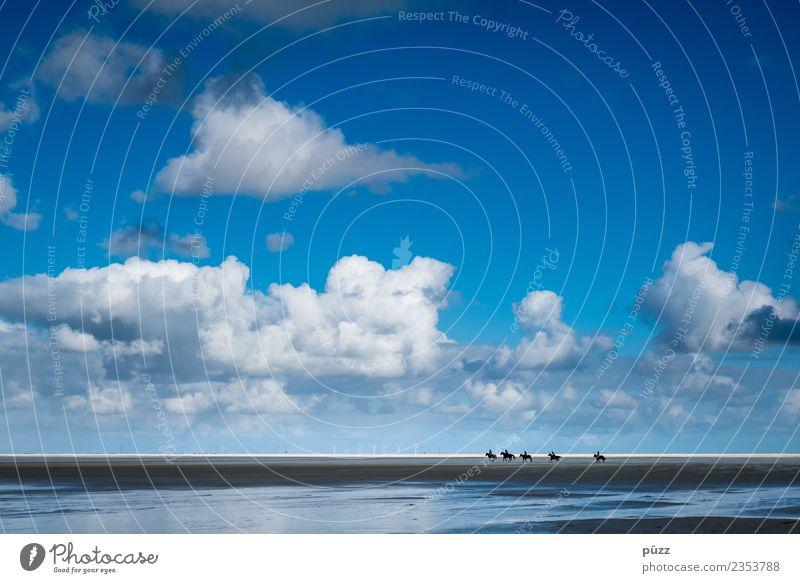 Galopp Ferien & Urlaub & Reisen Ferne Freiheit Sommer Sommerurlaub Strand Meer Insel Reitsport Reiten Mensch 5 Menschengruppe Umwelt Natur Landschaft Sand