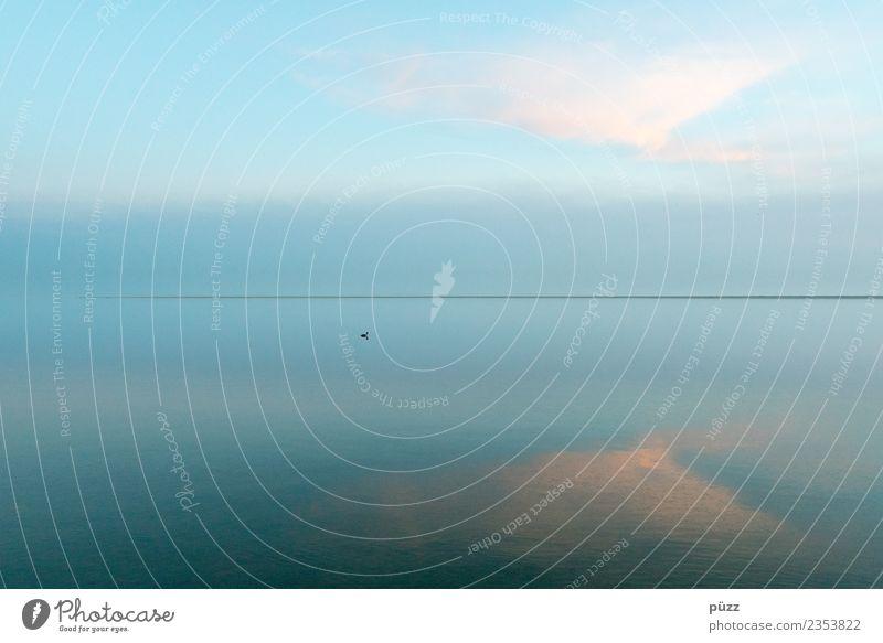 Einsam Umwelt Natur Wasser Klima Schönes Wetter Küste Nordsee Meer Tier Wildtier Vogel 1 blau türkis Unendlichkeit Ferne Stimmung ruhig Horizont Borkum